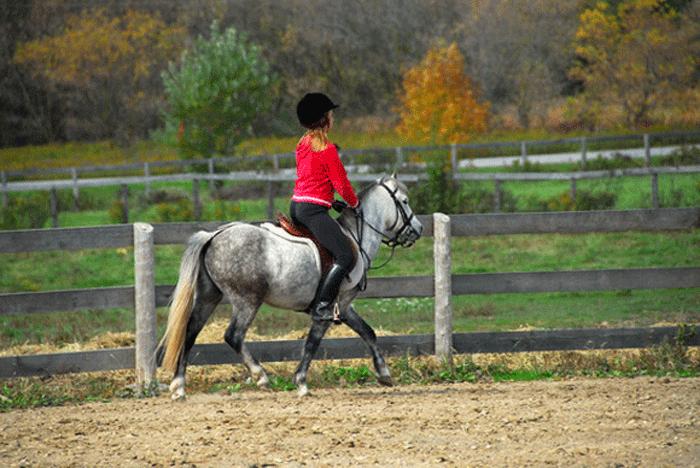 Reiten – Ein Sport für Kinder