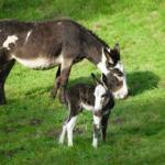 Triff den Tierpfleger Wildpark Schwarze Berg