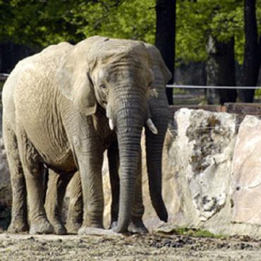 Zoo & Tierpark