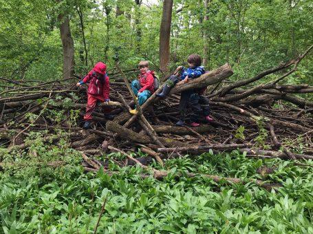Waldgeflüster – Waldgrupe