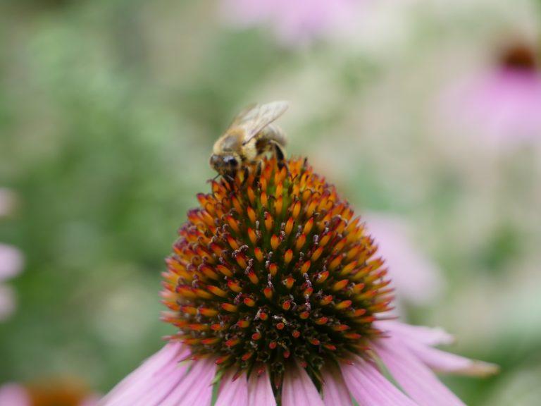 Garten der Sinne | Umweltbildungseinrichtung