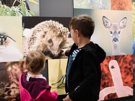 Kinder- und Familienführung im Ruhr Museum: Hund, Katze, Maus – Mensch und Tier im Revier