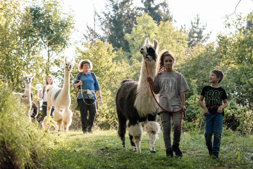 Lama-Abenteuer zum Kindergeburtstag
